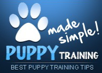 Visit this website for the best puppy training tips you'll find anywhere >>